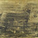 Cheetah Photine II