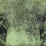 Elephant Photine