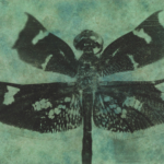 Dragonfly Photine