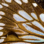 Forest Monarch Butterfly Wing