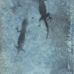 Geckos Photine