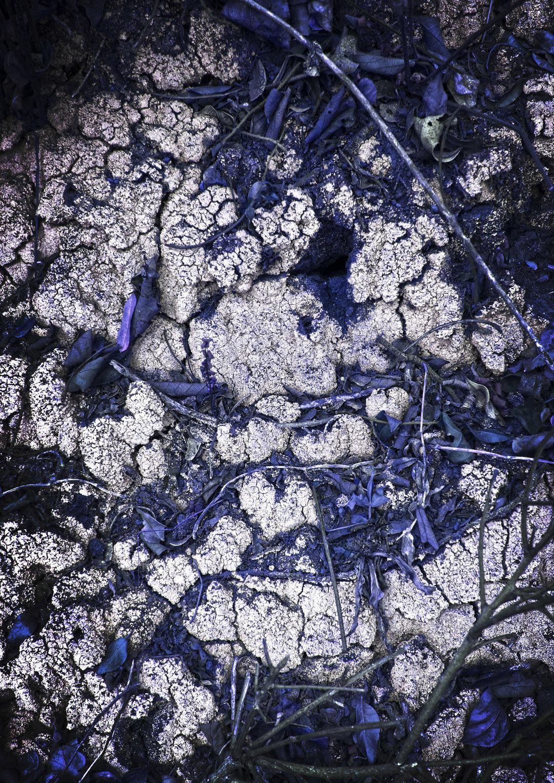 Kibale Forest Lichen III