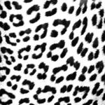 Leopard Skin (Black and White)