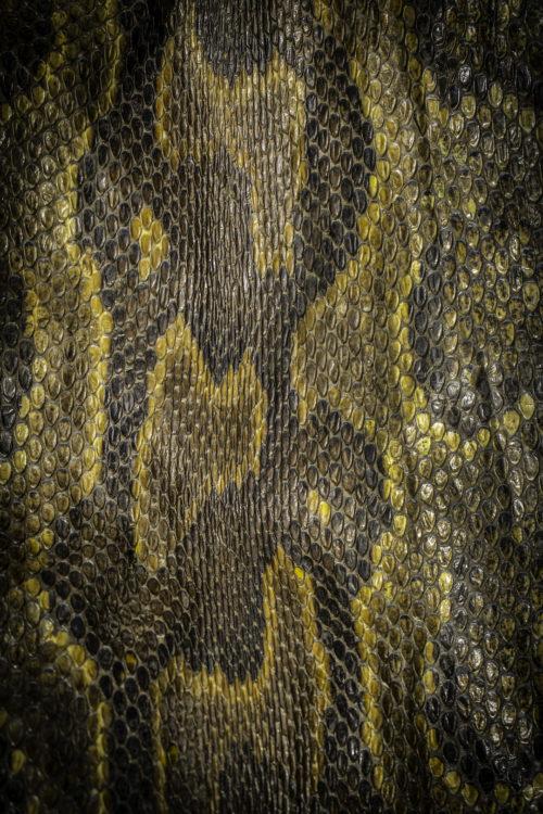 Python Skin Pian