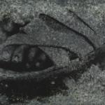 Sandalled Foot Photine