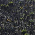 Lobelia Forest