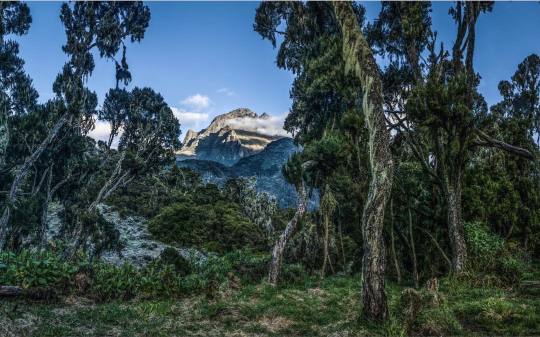 Mountains of the Moon | A Photographic Exploration of the Rwenzori Mountains